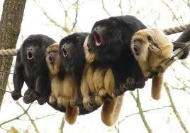 scimmie - Help Traduzioni